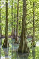 新緑の篠栗九大の森