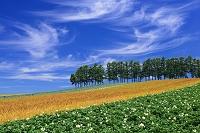 北海道 赤麦の丘