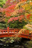 紅葉した木々と橋