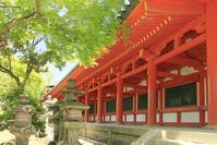奈良県 春日大社の灯篭