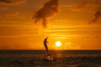 東京都 小笠原 夕日をバックにジャンプするハシナガイルカ