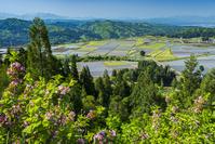 新潟県 山本山より田園風景