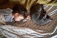 ベッドルームで眠る女の子とペット