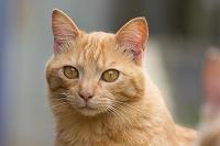 福岡県 離島の猫