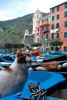 イタリア ヴェルナッツァ ボートにいる三毛猫