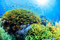 エジプト 紅海の海中風景 サンゴ礁