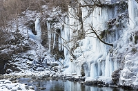 埼玉県 三十槌の氷柱