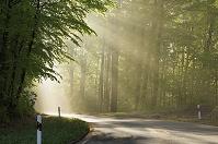 ドイツ バイエルン州 光が射す森の道