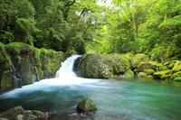 熊本県 菊池渓谷 黎明の滝と新緑