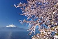 山梨県 朝霧漂う河口湖から富士山