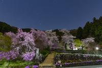 東京都 桜咲く夜の龍珠院