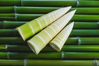 マダケのタケノコと青竹