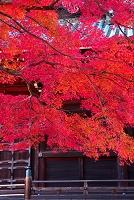 京都市 仁和寺の紅葉