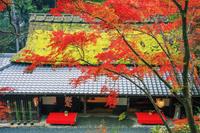 京都府 鳥居本 紅葉の平野屋