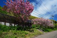 北海道南西沖地震から25年後の津波避難路