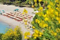 イタリア エルバ島 黄色い花とフェトヴァイアビーチ