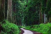 栃木県 日光市の杉並木