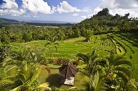 インドネシア バリ島 棚田