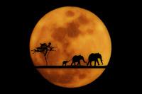 満月とゾウ