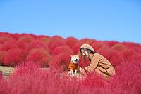 柴犬 ひたち海浜公園 コキア