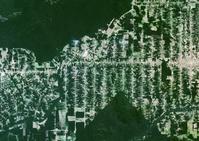 ブラジル アマゾンの森林伐採(2000年撮影)