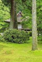 京都府 青モミジの三千院