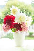 花瓶の花 ダリアとアジサイ