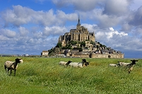 フランス モン・サン・ミシェルと羊