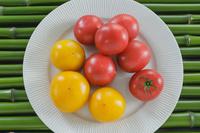 野菜 青竹の上のトマト