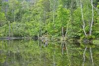 長野県 乗鞍高原 まいめの池