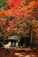 奈良県 紅葉の吉野山西行庵