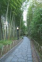 静岡県 修善寺温泉の竹林の小路