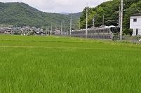 兵庫県 JR福知山線 普通電車