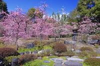 京都府 ウメの咲く城南宮