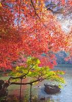 東京都 小石川後楽園 泉水と紅葉