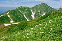 富山県 お花畑と奥大日岳