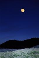 月光に輝くススキの草原