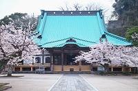 神奈川県 鎌倉 光明寺