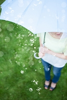 梅雨 傘を流れる水滴