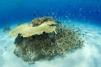 慶良間諸島のサンゴ礁と熱帯魚