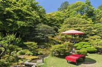 滋賀県 新緑の旧竹林院庭園
