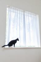 出窓に座る猫