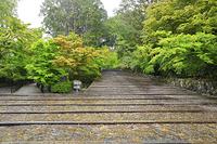 京都府 光明寺 雨に濡れる新緑の表参道ともみじ参道