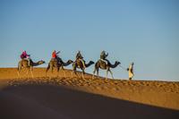 モロッコ サハラ砂漠のラクダツアー