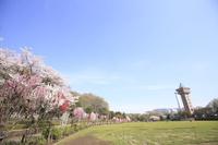 神奈川県 相模原麻溝公園