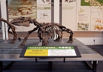 デスモスチルス・ヘスペルスの化石