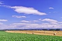 北海道 千歳市  丘の豆畑と麦のロール