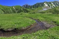 富山県 高層湿原の小さい流れ