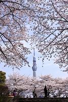 隅田公園からスカイツリー