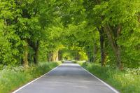 ドイツ 新緑のトンネルの一本道
